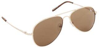 Lawman Pg3 Brown Aviator Medium Sunglasses