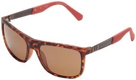 Guess  6843 52H Size 57-18-140 Brown Wayfarer Sunglasses